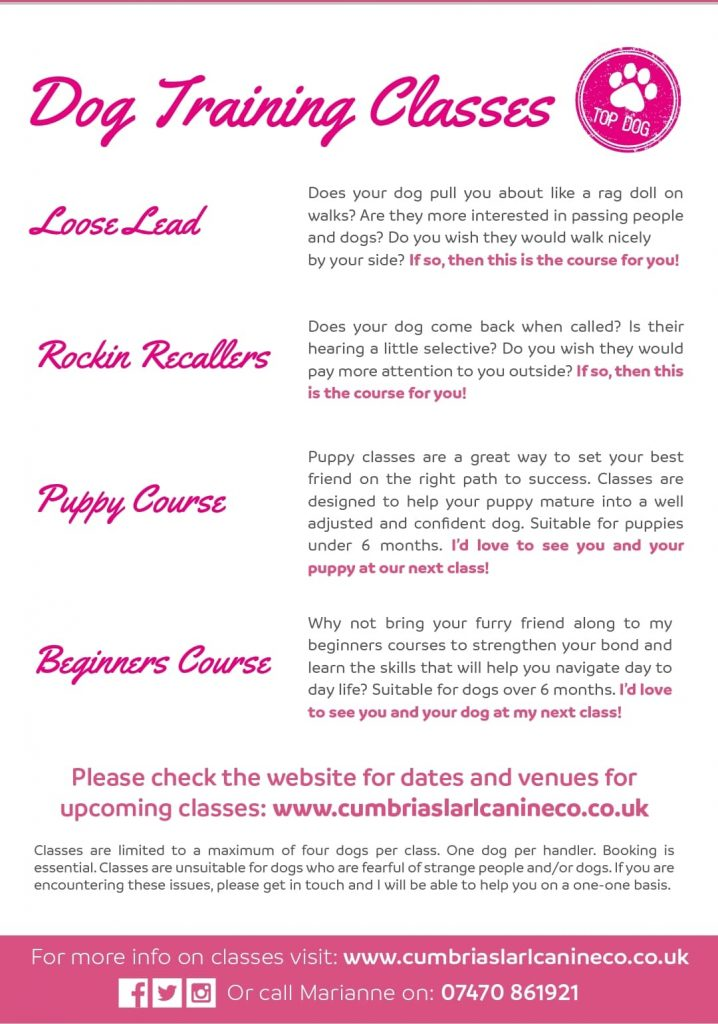 Cumbrias Larl Canine Co Dog Training Classes